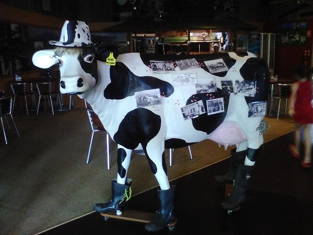 miss-malanda-cow